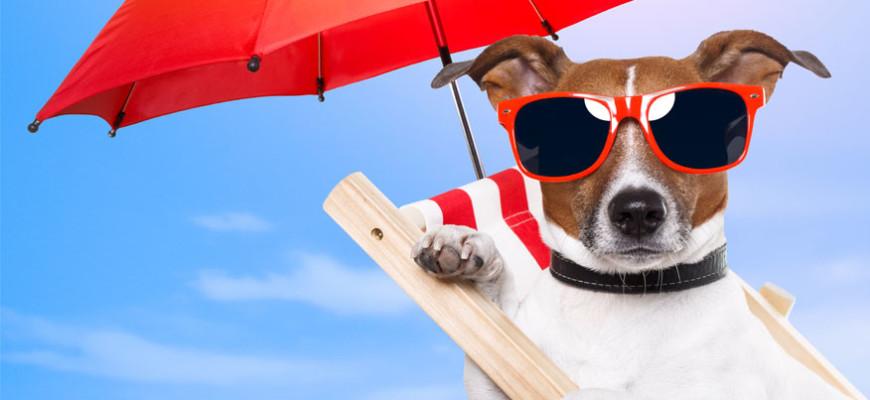 Dog-Slider